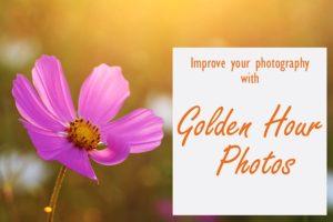 golden hour light